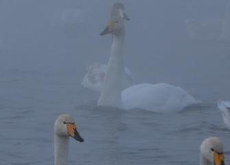 25 января- тур на  Лебединое озеро