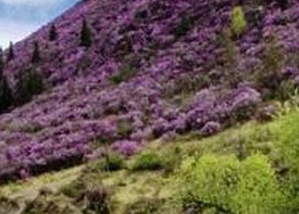3-4 мая - Цветение Маральника