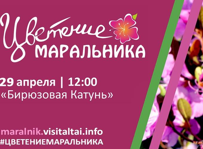 Приглашаем всех посмотреть на чудо природы, цветение Маральника в Алтайских горах.